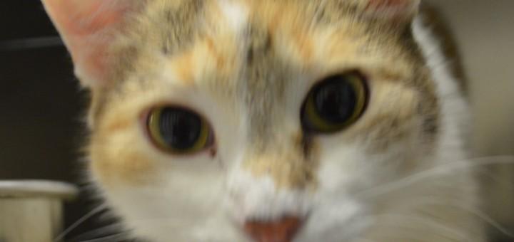 Great River Rescue Cat Cam