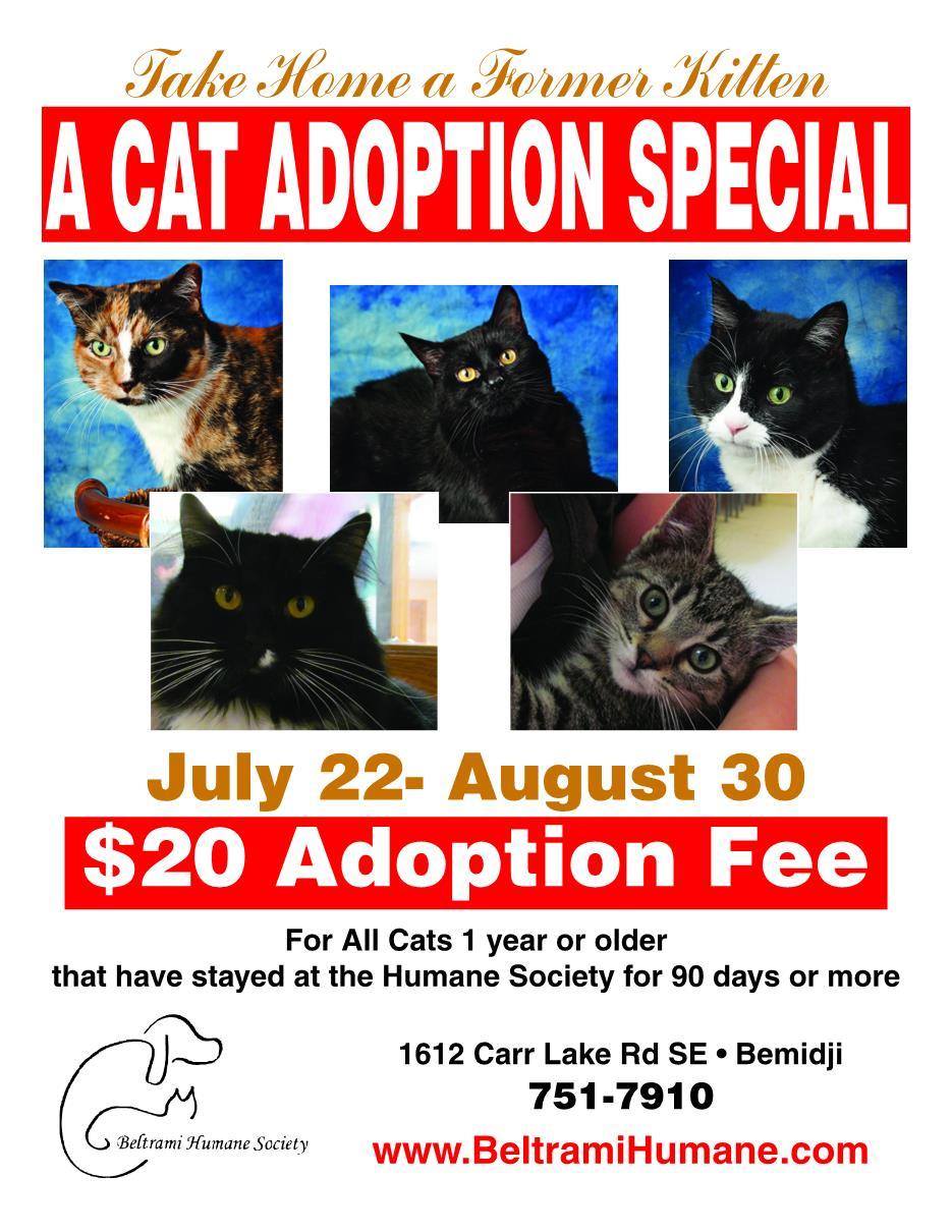 Cat Adoption Flier2014
