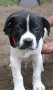 Adopted November 12