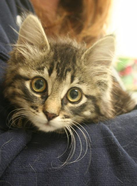 Adopted November 29
